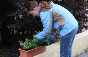 blumen-werden-gepflanzt